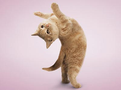 http://donbass.ua/multimedia/images/content/2010/08/12/yoga-cat-2.jpg