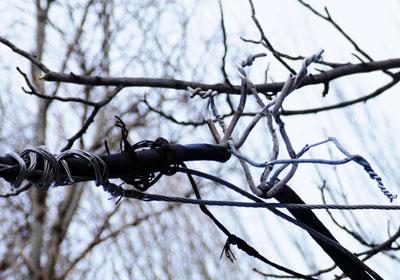 Оголенные провода путаются с ветвями деревьев.