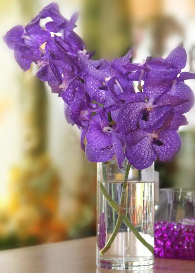 Орхидеи удивляют разнообразием расцветок.