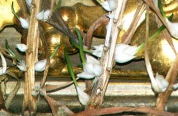 Чудо Свято-Николаевской церкви - лилии, которые растут в иконе целый год и расцветают именно на Пасху.