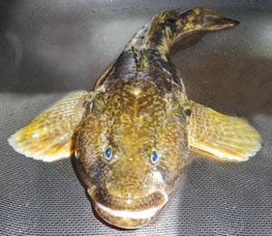 клюет рыба на мясо