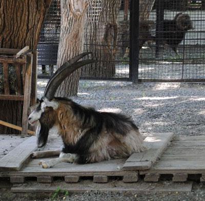 Зоопарк в Докучаевске. Разномастные жители Лебединого озера.