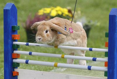 Открытый спортивный кроличий турнир состоялся в Роммерсе (Германия)