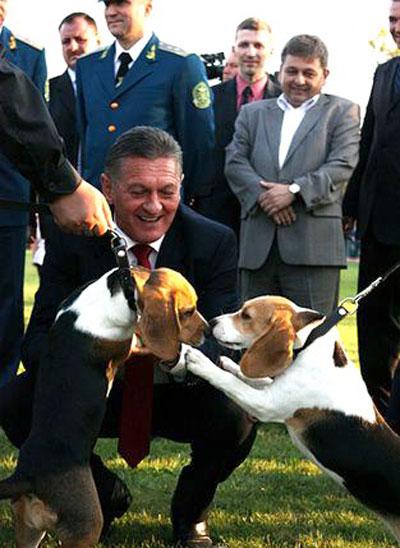 Губернатор Закарпатской области Александр Ледида на соревнованиях кинологов таможни пришел в восторг от псов породы бигль.