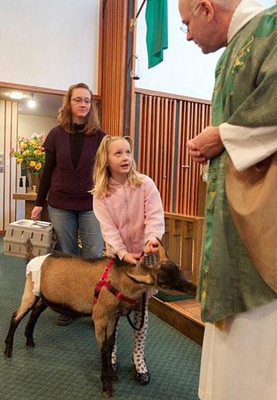 4 октября во многих странах отмечали Международный день животных. Традиционно в этот день американцы из Грешем (штат Орегон) приводят своих домашних питомцев на службу к местному священнику для благословения.
