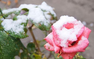 Многие регионы Украины накрыли осенние заморозки. А в Харькове выпал первый снег.