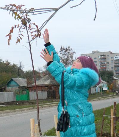 Артемовские защитники природы, протестующие против вырубки деревьев в ходе реконструкции стадиона, могут успокоиться: не дожидаясь окончания работ, взамен выкорчеванных уже начали сажать новые.