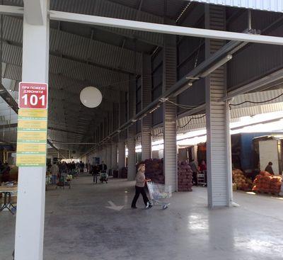 выставка саженцев - рынок Господар