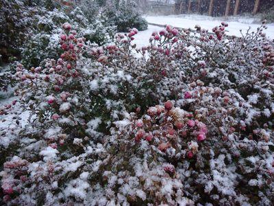 снег Донецк