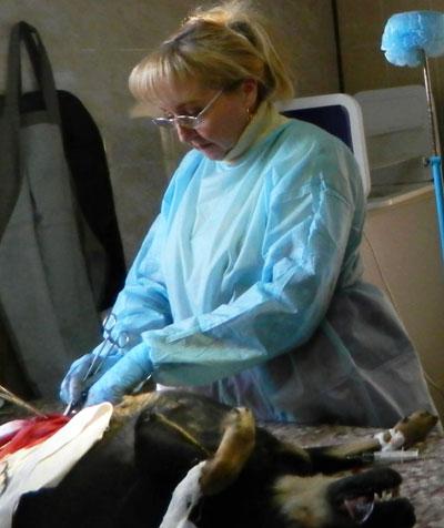Операция по стерилизации проходит под общим наркозом и не представляет опасности для животного.