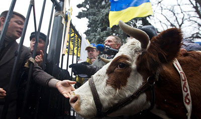 Когда-то Калигула привел в сенат коня. А скандальный нардеп Олег Ляшко попытался провести в украинский парламент корову. Однако правоохранители этого не позволили.