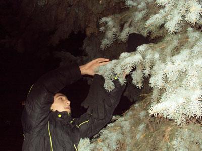 Новогодняя елка в Артемовске