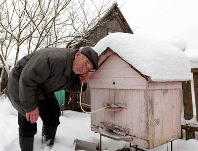 обильные снегопады и настоящие морозы накрыли не только Украину, но и Беларусь. Александр Дик каждый день прислушивается к пчелам в улье.