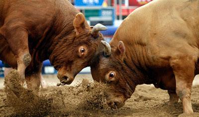 Чтобы поддержать традицию проведения коррид в Южной Корее, здесь состоялись бои быков. Животные по кличкам Тайфун и Ли Бом устроили настоящее мужское сражение.