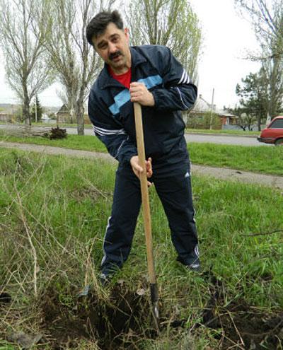 В поселке Опытное теперь растет молодое дерево айвы, посаженное заместителем городского головы Сергеем Гончаровым.