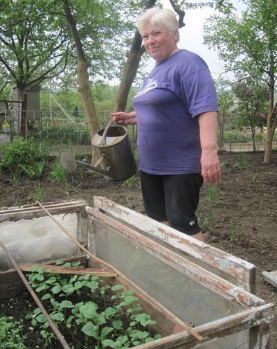Подкормки Любовь Рева вносит под корень. Если раствор попал на листья, на следующий день надо полить растения через ситечко, чтобы смыть остатки удобрений! - рассказывает она.