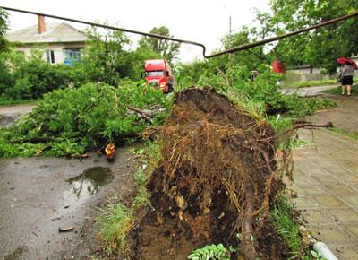 Снежное в минувший четверг впору было переименовать в Ветряное. На улице Руднева с корнем вырванное дерево повалилось на трубу газопровода, перекинутую через шоссе. Металл, к счастью, выдержал, хотя заметно прогнулся.