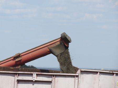 Обмолочены первые полторы тонны семечек нового урожая.