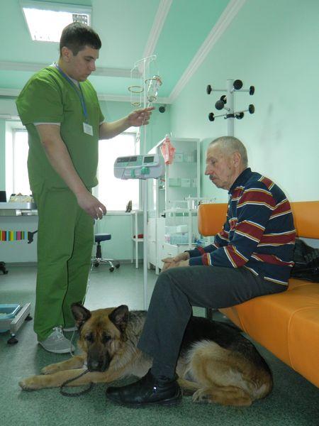 Инфузионную терапию овчарке Марте  проводит доктор Олег Кейдунов.