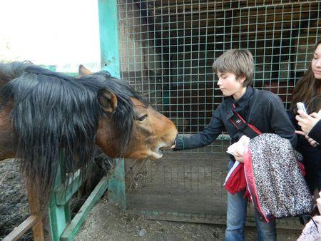 Для городских школьников лошади на ямпольской страусовой ферме - это экзотика, местных подростков природа окружает всегда.