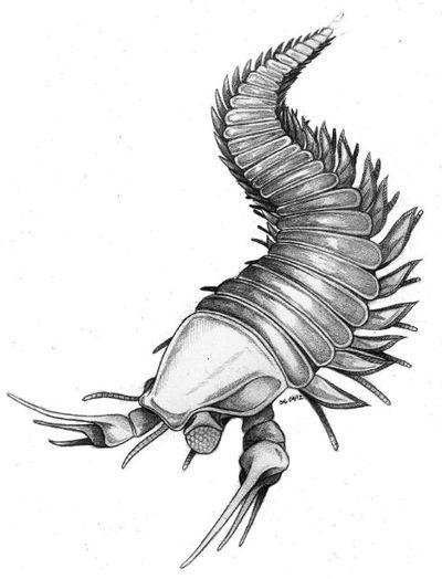В честь Джонни Деппа назвали древнее существо