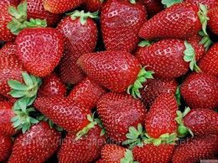Розана Киевская - ранняя, даёт ягодки (16 г) уже в конце мая. Вкусная, сладкая, ароматная, с блестящей плотной кожицей. Плоды могут долго висеть на кусте, не загнивая.