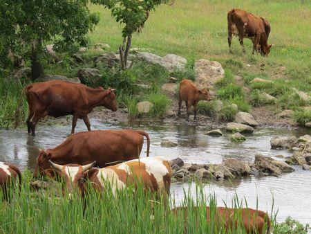 Ради сохранения водопоя пастухи перегородили Мокрую Волноваху каменной грядой.