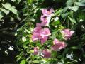 Донецкий ботанический сад. Тропики