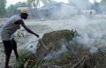 Нелегальное производство древесного угля может превратить Украину в Гаити