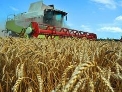 Украинских аграриев ожидают рекордные убытки