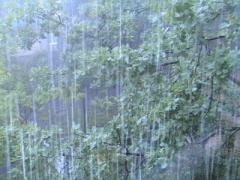 МЧС Украины предупреждает: В Украине дожди, грозы и шквалы