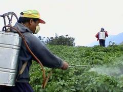 В Иркутской области дети отравились пестицидами