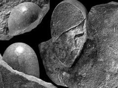 Палеонтологи нашли необычные яйца динозавров