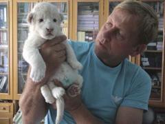 В крымском зоопарке родились пять белых львят
