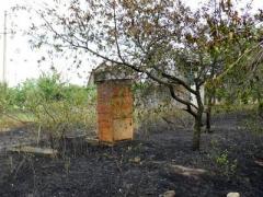 Возле Мангуша горел лес и дачи
