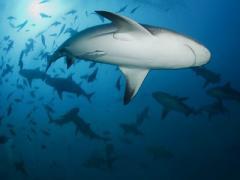 В Донецке пройдет уникальная выставка подводной фотографии