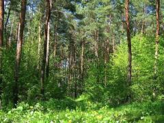 В Донецкой области определят лучшее лесничество