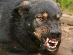 В Мариуполе бродячие собаки нападают на детей