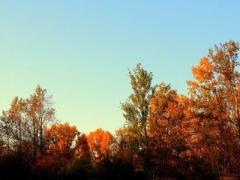 Осень балует дончан хорошей погодой