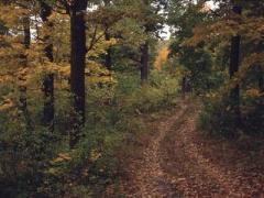 Спасатели помогли найти женщину, заблудившуюся в лесу