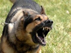 Агрессивные животные нападают на детей в Мариуполе