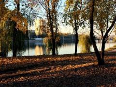В Донецке создадут кладбища домашних животных
