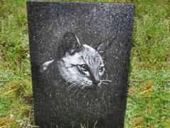 На пути создания кладбища для домашних животных лежит серьезное препятствие