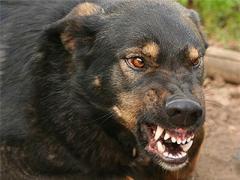 В Донецкой области женщину загрызли собаки