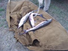 Пограничники изъяли у браконьеров 400 килограммов рыбы
