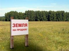 Украинцы активно приобретают землю в Польше