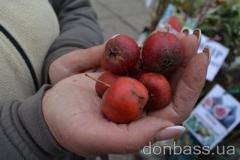 В Донецке оказались гигантский боярышник и мечта звёзд Голливуда (ФОТО)