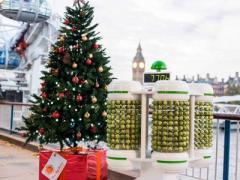 Англичане такие затейники: новогодние огни зажигает капуста (ФОТО + ВИДЕО)