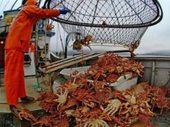 Вместо осьминогов шхуна по-браконьерски выловила множество крабов