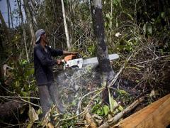 Новоазовские дровосеки варварски уничтожили полпосадки